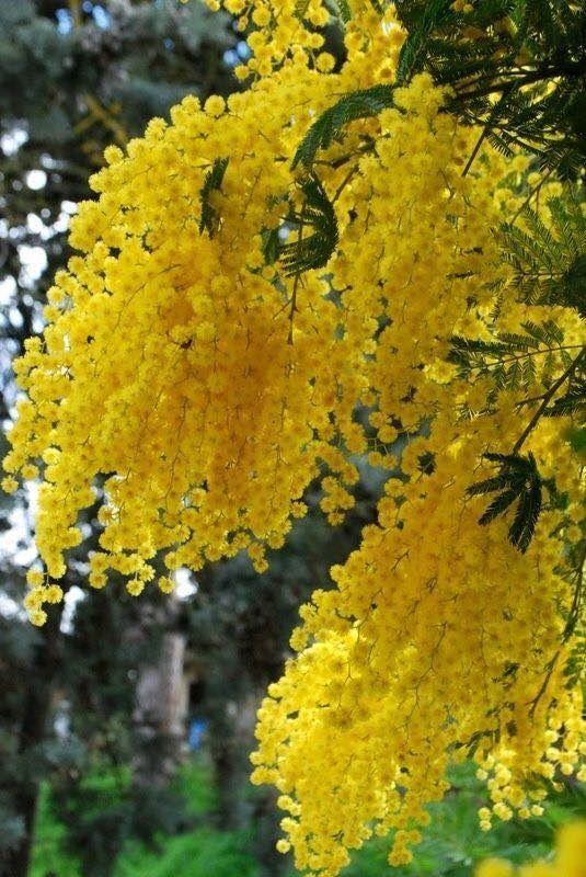 Artificial Mimosa