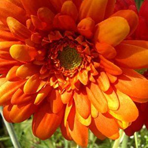 Silk Daisy Flower