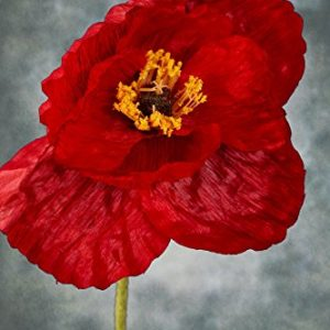 Silk Poppy Flowers