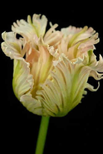 faux tulip flower