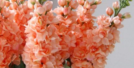 silk hyacinth flowers
