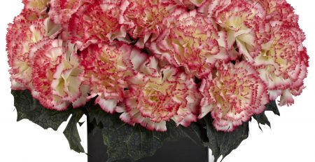 silk carnation arrangement 1372.CP